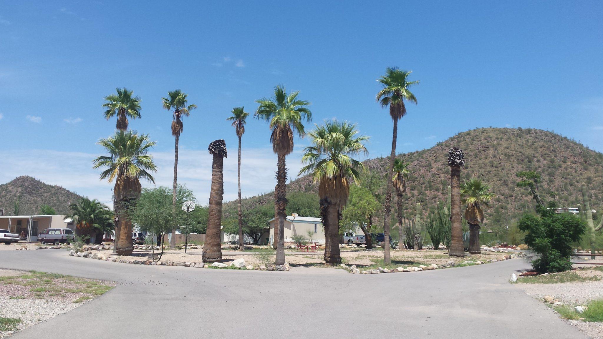 Cactus Gardens Mobile Home Park In Tucson Arizona